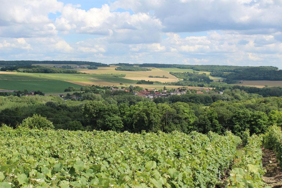 Champagne Rogge Cereser - vue du vignoble