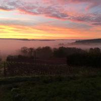 Champagne Rogge Cereser - Vue du vignoble - levé de soleil